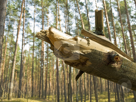 Fallen tree in forest stock photo, Fallen pine tree in the green wild forest by Sergej Razvodovskij