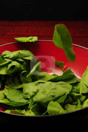 Salad Toss stock photo, A delicious salad being prepared for the evening meal by Timothy OLeary