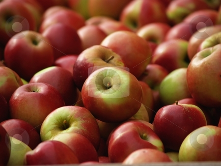 Fresh red apples stock photo, Apples picked from an orchard by Michelle White