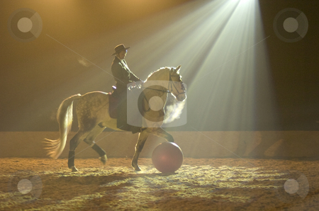 Spanish horse playing ball stock photo, Spanish horse playing ball in spotlight by Andreas Brenner