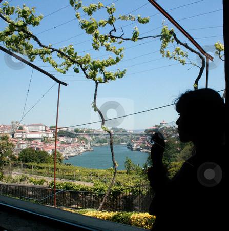Porto wine stock photo, Grapevine of porto wine in porto by Marc Torrell