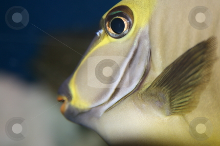 Fish closeup stock photo, Fish closeup by David Schmidt