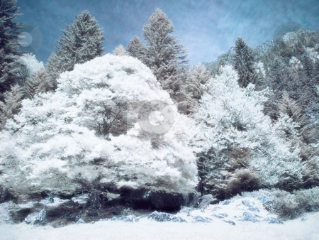 Infrared forest stock photo, Infrared picture of a beautiful forest in the mountains  orton processed by Laurent Dambies