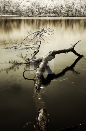 French Creek State Park Branch stock photo, Branch in water at Hopewell Lake. by Eric Lukavsky