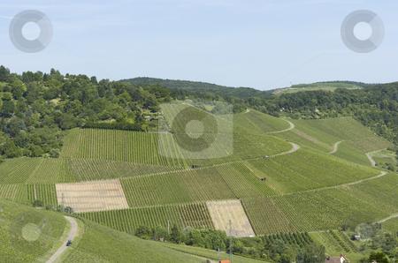 Vineyard stock photo, Huge vineyard by Andreas Brenner