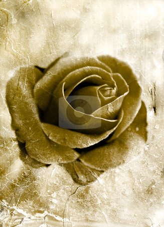 Grunge rose 0801 stock photo, Grunge style rose background by Kirsty Pargeter