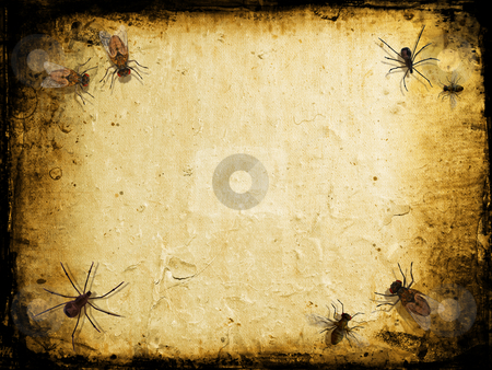 Grunge insects stock photo, Grunge background with spiders and flies by Kirsty Pargeter