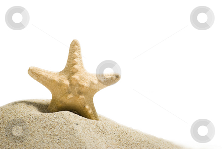 Star fish with clipping path stock photo, Star fish and sand isolated on white background by Desislava Dimitrova