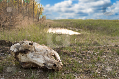 Skull stock photo, A decayed skull sitting in the dirt outside on a cloudy day by Richard Nelson
