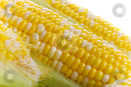 Fresh corn stock photo, Close up of fresh tasty corn on the cob by Steve Mcsweeny