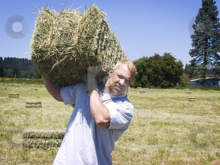 Man lifting hay bale  stock photo, Man lifting hay bale in field by John Teeter