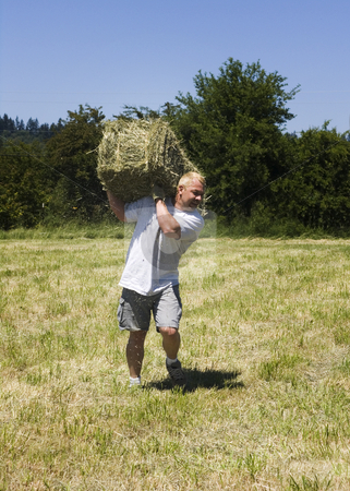 Man lifting hay bale stock photo, Man lifting a hay bale in field by John Teeter