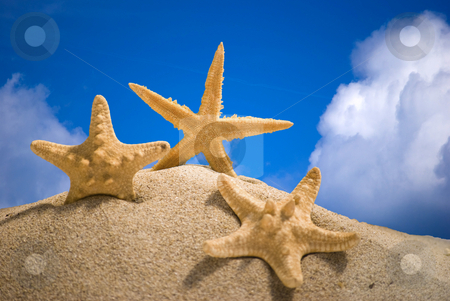 Star fish stock photo, Star fish and sand on blue sky background by Desislava Dimitrova