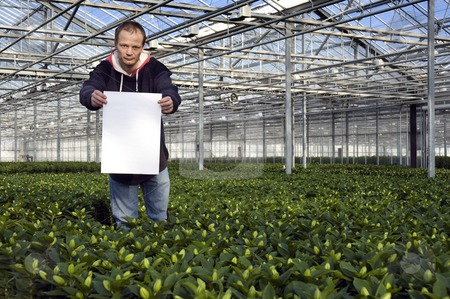 Blank sign in a glasshouse stock photo, A happy man holding up a blank sign inside a huge glasshouse by Corepics VOF