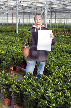Blank sign in a glasshouse stock photo, A happy man holding up a potted plant and a blank sign inside a huge glasshouse by Corepics VOF