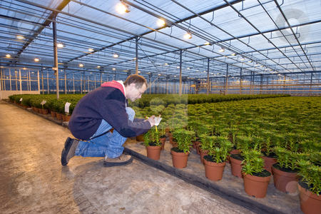 Identifying plants stock photo, A man,writing on the identification tag of a row of potted plants inside a huge greenhouse by Corepics VOF
