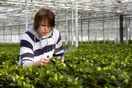 Checking plants stock photo, A man, surrounded by plants, checking the bulbs by Corepics VOF