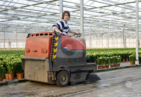 Cleaning a glasshouse stock photo, A man, driving an industrial cleaning cart, working hiw way through the concrete flooring of a huge glasshouse by Corepics VOF