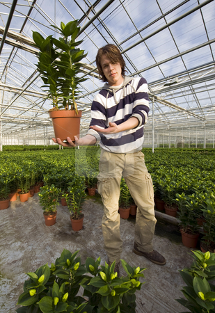 Showing a plant stock photo, A man, standing inside a huge greenhouse, showing a plant by Corepics VOF