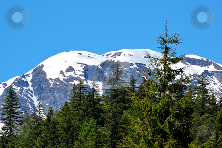 Summer trees on mountain stock photo, Summer trees on mountain (Val Formazza, Italy) by ALESSANDRO TERMIGNONE