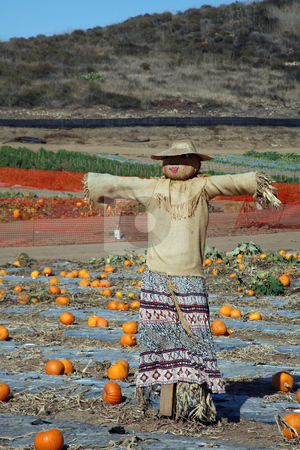 Pumpkin patch scarecrow stock photo, Female scarecrow in the middle of a pumpkin patch by Stacy Barnett