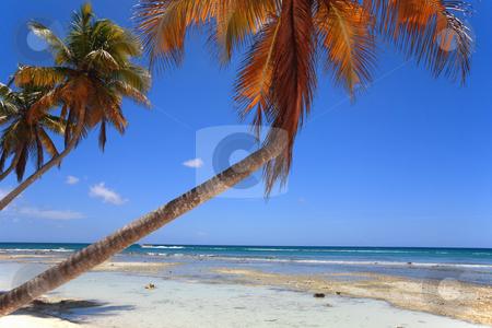 Tropical beach  stock photo, Tropical beach at Punta Cana, Dominican Republic by Tom P.