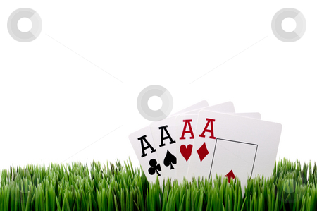 A horizontal image of four ace playing cards in grass with a whi stock photo, A horizontal image of four ace playing cards in grass with a white background by Vince Clements