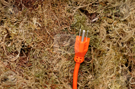 An orange extension cord on moss stock photo, An orange extension cord on moss by Vince Clements
