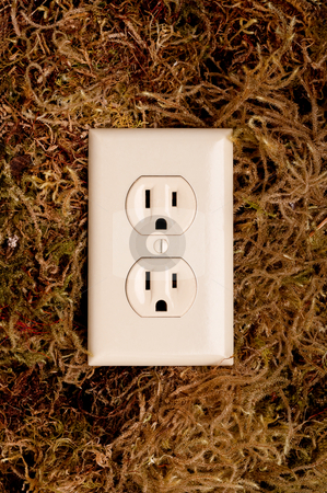An American power outlet on a moss background stock photo, An American power outlet on a moss background by Vince Clements