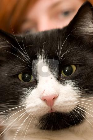 Cat stock photo, Animal series: black and white cat portrait by Gennady Kravetsky