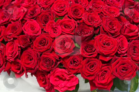 Bunch of flowers stock photo, Flower series: bunch of red roses. romantic mood by Gennady Kravetsky