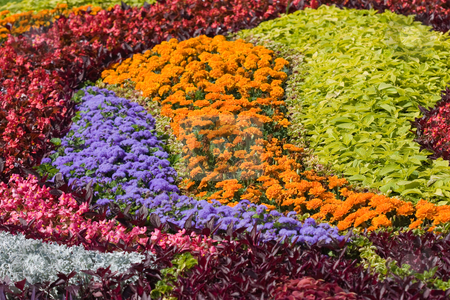 Flower background stock photo, Design of different color flowers, natural background by Gennady Kravetsky