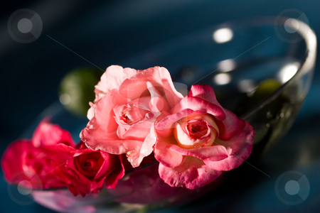 Roses of love stock photo, Still life with tenderness roses, macro picture by Gennady Kravetsky