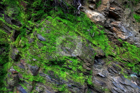 Mossy Rocks stock photo, Moss on rock texture background by Jack Schiffer
