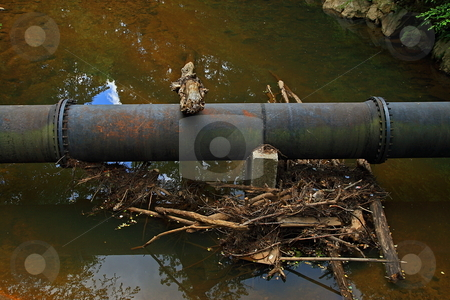 River Trash stock photo, Clutter on the river after a storm by Jack Schiffer