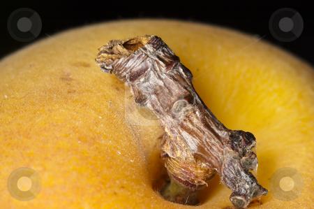Apricot stock photo, Macro closu up shot of an apricot by Vlad Podkhlebnik