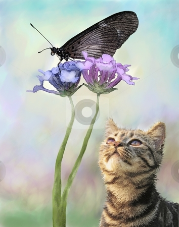 Cat and the butterfly stock photo, Montage with artistic effects, the cat stares st the butterfly by Angie Wilken
