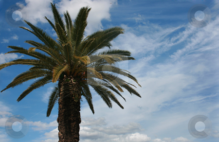 Palm stock photo, Palm and cloudy summer sky by Marc Torrell