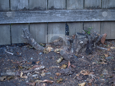 Stump stock photo, An old tree stump near a fence in an outside garden. by Robert Gebbie