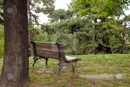 Wooden bench in park stock photo, Wooden bench on hill in park next to tree by Julija Sapic