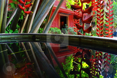 Thai garden reflection stock photo, Heliconia flowers reflected in a Thai garden. Jim Thompson house museum, Bangkok. Thailand by Martin Darley