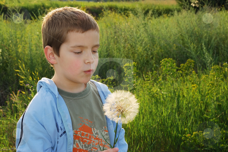 Childs wish stock photo, A small boy with big dreams, backlit with afternoon sun making a wish while holding big dandelion-like plant in hand. by Ivan Paunovic