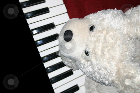 Bear Play stock photo, This little bear enjoys pressing keys. Children will love him. by Reinhart Eo