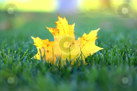 Fallen yellow leaf on green grass stock photo,  by Heather Shelley