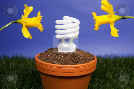 Energy saving light bulb planted stock photo, Compact fluorescent light bulb planted in a planter with daffodils by Bryan Mullennix