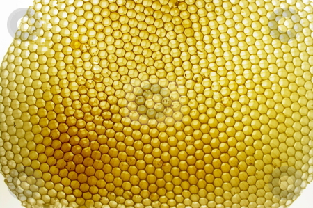 Bee Hive stock photo, Backlit hexagonal beehive by Martin Darley