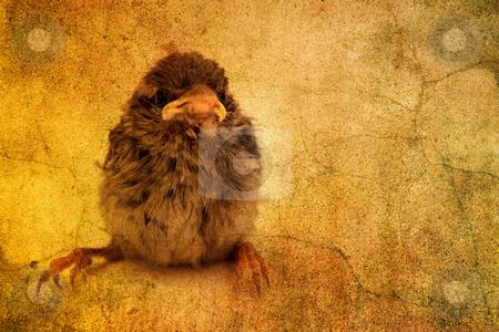 Cute little bird stock photo, Cute little bird by Christophe Rolland