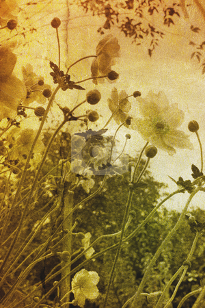 Vintage flowers stock photo, Vintage flowers by Christophe Rolland