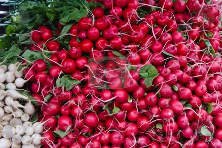 Radishes stock photo, Fresh Radishes by Thomas Marchessault