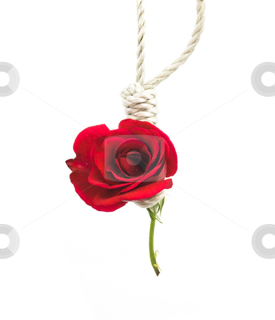 Love Death stock photo, Conceptual photo of a hanging rose for the death of love by John Teeter